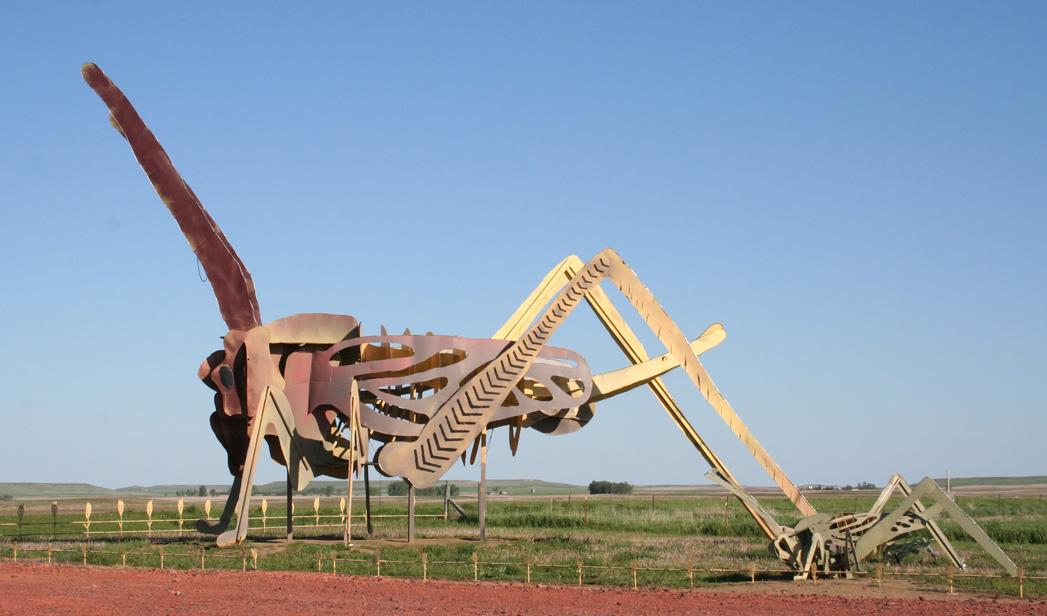 Biggest Grasshopper In The World | www.pixshark.com ...